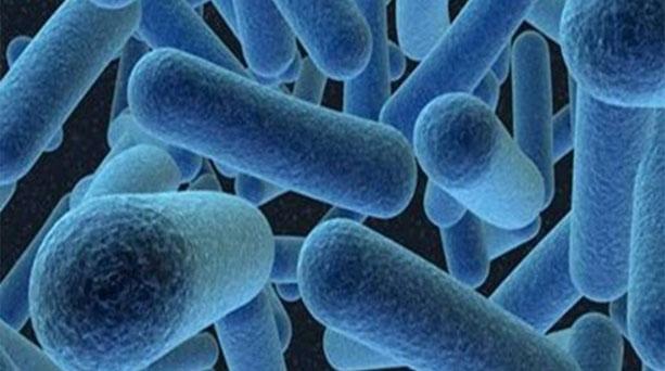 бактерии для рыбалки